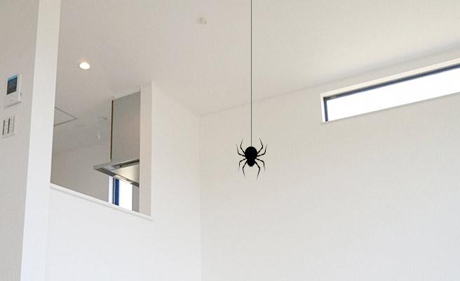 天井から降りてくるの蜘蛛