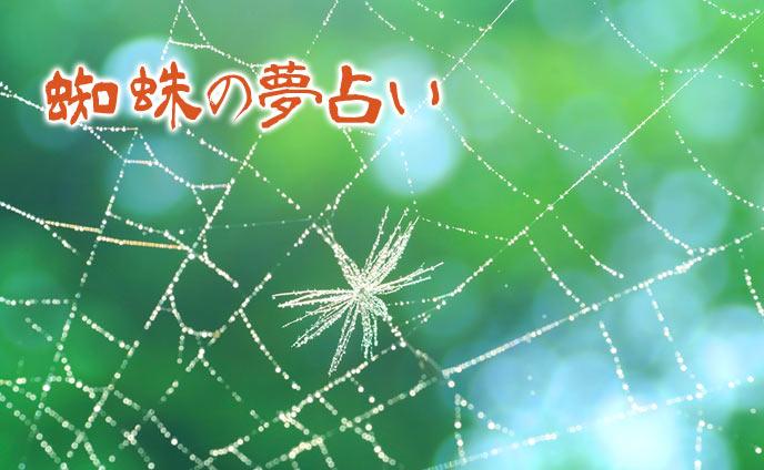 夢占い・蜘蛛が出てくる夢が意味する恋愛&人間模様の暗示