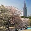 新宿の公園おすすめ・散歩デートにぴったりの人気スポット