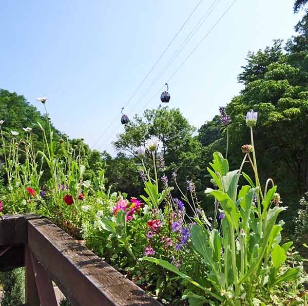 園内に咲く可愛いハーブの姿とその上を行き交うロープウェイの風景☆