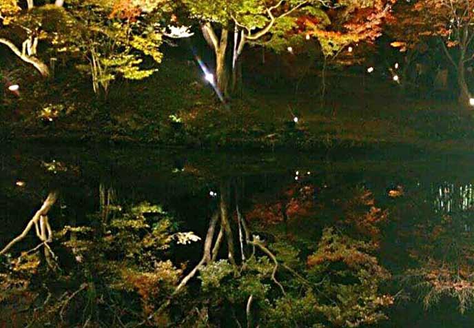 水辺に反射して映し出される紅葉も楽しめます☆