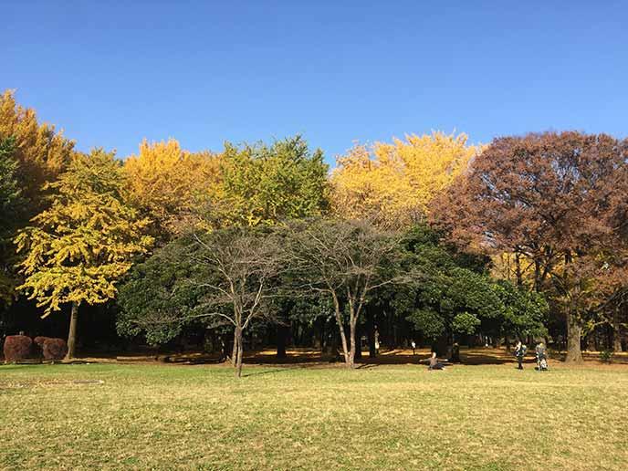 秋には色づいた木々が並び紅葉を楽しむこともできます☆