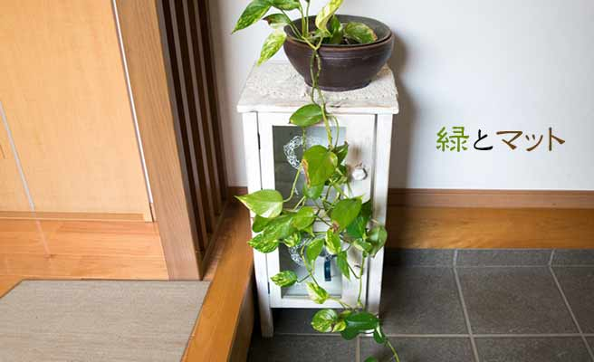 玄関の観葉植物とマット