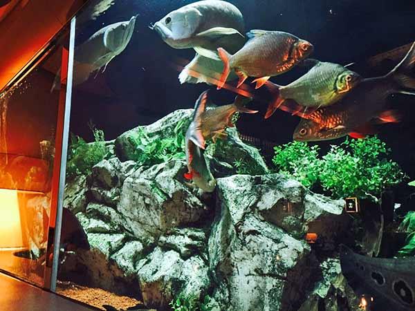 水槽の中を泳ぐ魚たち。なんだか幻想的ですよね。