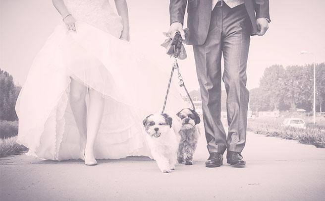 新老夫婦とペットの犬