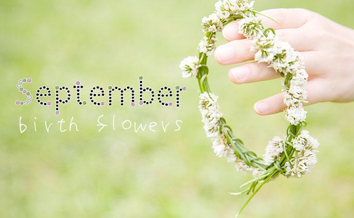 9月の誕生花と花言葉・誕生日が意味するあなたの運命