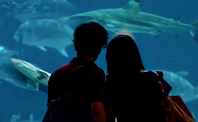 水族館でデートしてるカップル
