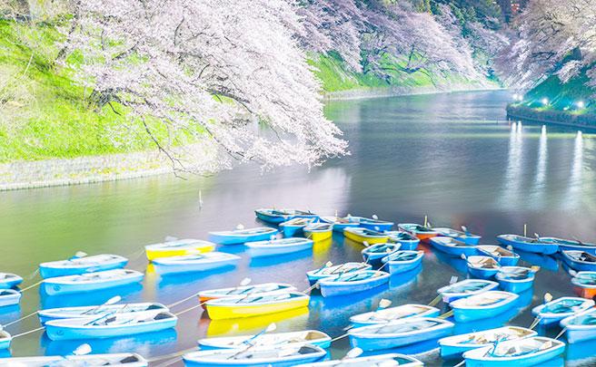 満開の桜とボート