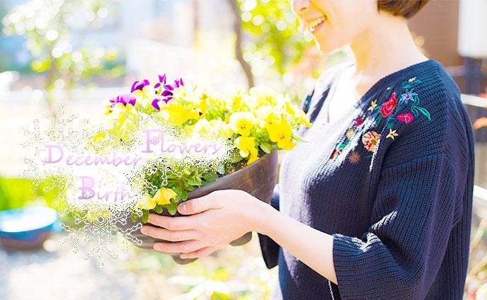 12月の誕生花と花言葉・誕生日が意味するあなたへの助言