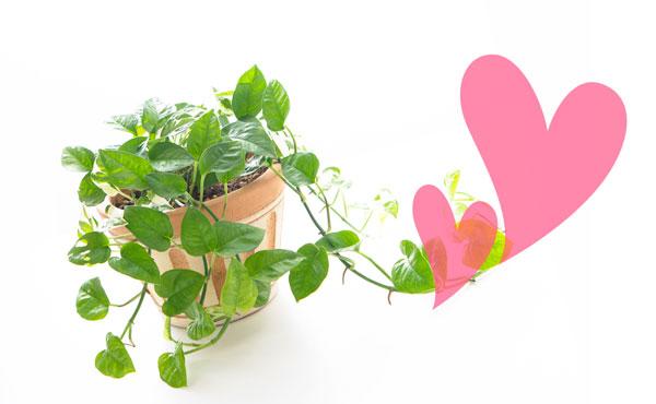 風水で恋愛運アップする観葉植物活用法3つ