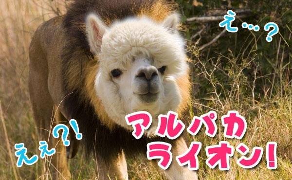 アルパカ顔のライオン!雑食系男子の優しい顔に隠された特徴4つ