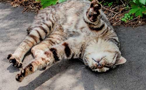 自由な猫の化身の彼には束縛は禁物。彼の自由な時間をメールで奪ってはいけません。