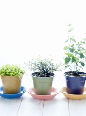 植物のパワーを借りるおまじないはポジティブな気持ちで!