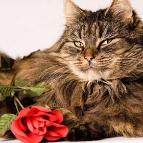 バラの香りをまとって女子力UP(する猫)