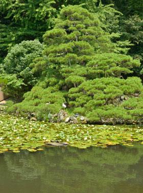 八重垣神社の鏡の池で恋を占おう