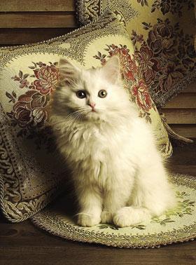 リッチで癒し系な猫