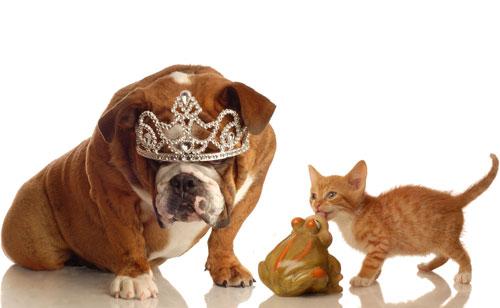 犬派女性と猫は女性はどっちが得?