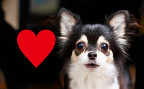従順で愛情表現も豊かなひとは犬っぽい!