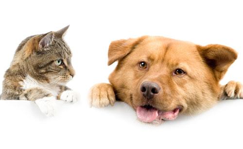 あなたは犬派?それとも猫派?