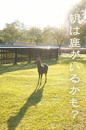 朝の奈良公園の鹿