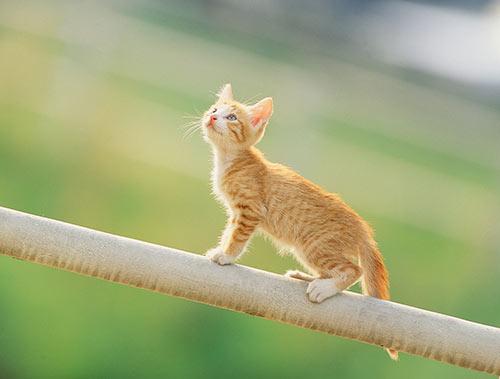 ラッキージンクスの猫さん