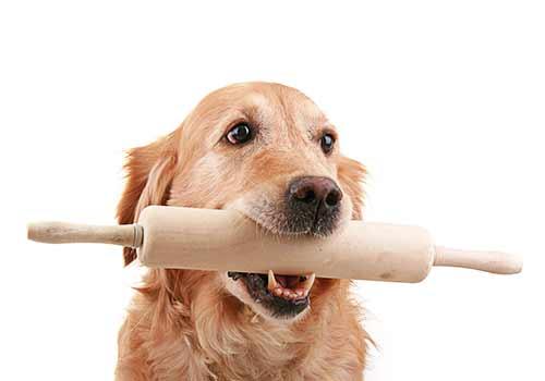 癒しオーラマックスな犬