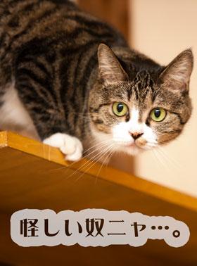 怪しいヤツ…と猫に疑われたとき