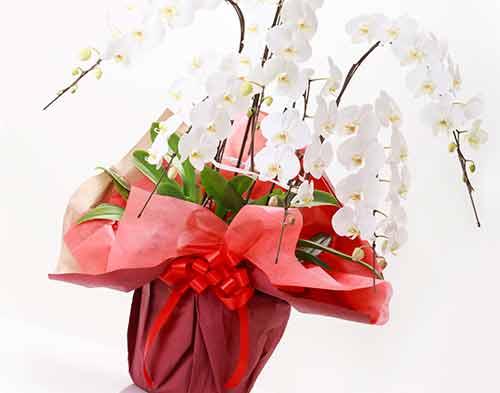 注意が必要なお花のプレゼント